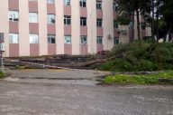 Hastane bahçesinde ağaç katliamı