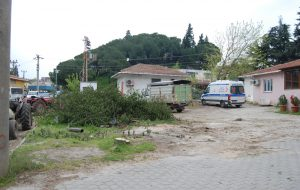 Hastanede ağaç katliamı sürüyor
