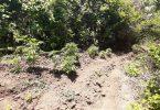Bayramiç'te 133 kök kenevir yakalandı