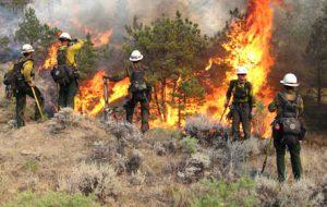 Geçici orman işçilerinin sözleşmeleri kısaltıldı