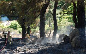 Yarım hektar orman yandı