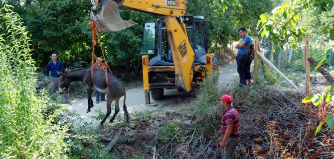 Köyde eşek kurtarma operasyonu