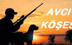 AVCI KÖŞESİ