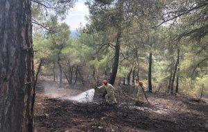 Derbentbaşı Köyü'nde orman yangını