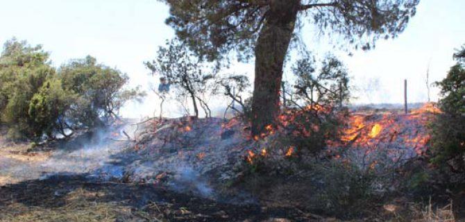 Bayramiç'te anız yangını