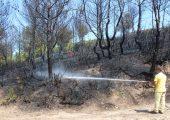 Çavuşköy'de ağaçlık alan yandı