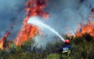 Orman yangınlarının ardı kesilmiyor