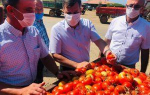 """""""Bu fiyatlar ile domates tarımı sürdürülemez"""""""