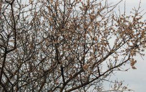 Ağaçlar çiçek açıp meyve verdi