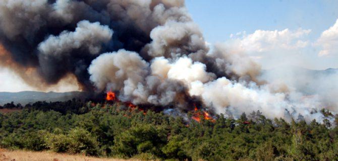 Bekirler'de orman yangını