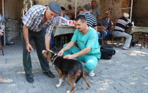 Haydi köpekler aşıya